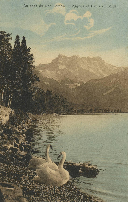 Au bord du lac Léman - Cygnes et Dents du Midi © Seal. R.E. Chapallaz fils, Lausanne