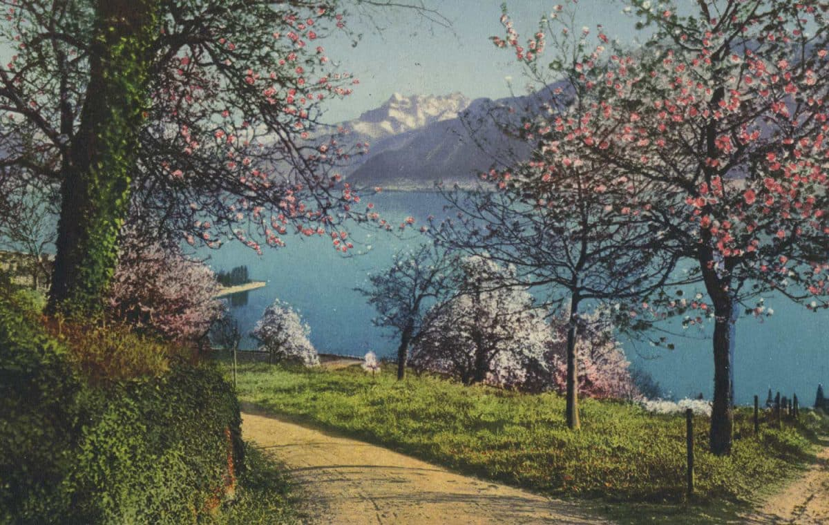 Bords du Léman et Dents du Midi © Phot. A. Kern, Editions Star, Lausanne, carte datée de 1933