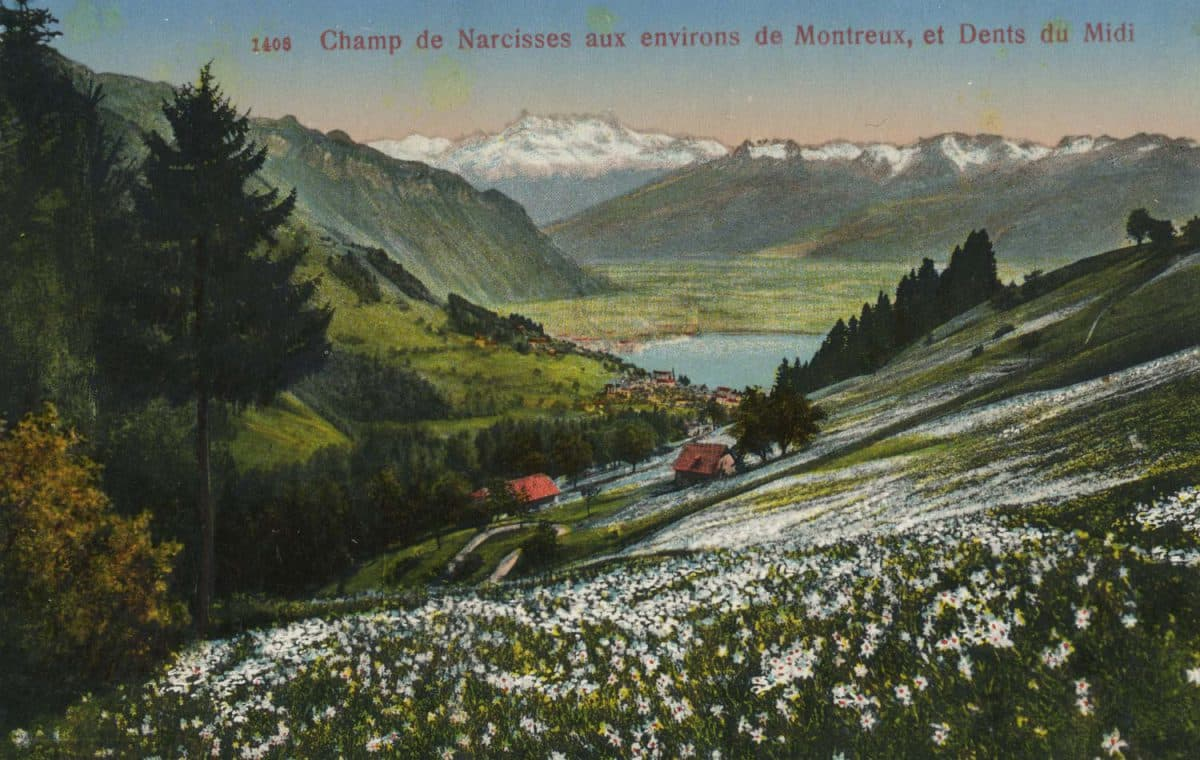 Champ de narcisses aux environs de Montreux, et Dents du Midi © Photo Editeur O. Sartori, Genève