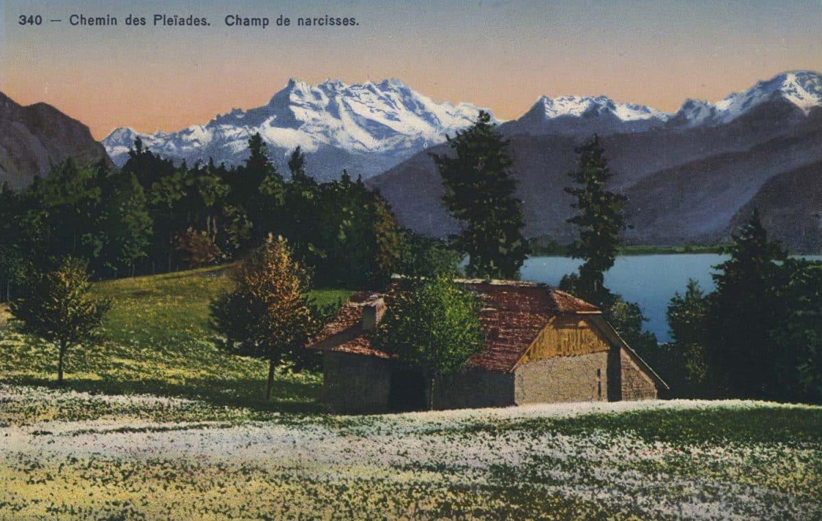 Chemin des Pléïades. Champ de narcisses © Société Graphique Neuchâtel