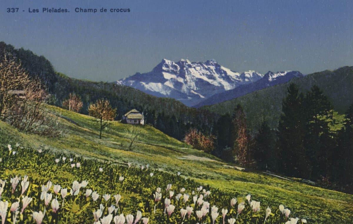 Les Pléïades. Champ de crocus © Société Graphique Neuchâtel
