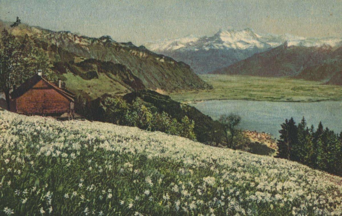 Les narcisses et les Dents du Midi © Phot. A. Kern, carte datée de 1928