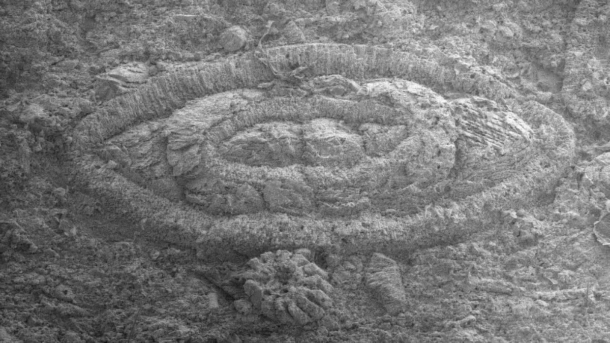 Trois histoires géologiques. Particulièrement abondantes durant l'Éocène (entre 55 et 34 millions d'années), les nummulites présentes dans les couches blanches de la paroi nord des Dents du Midi sont de minuscules animaux marins de forme lenticulaire, plus ou moins convexe et à coquille spiralée