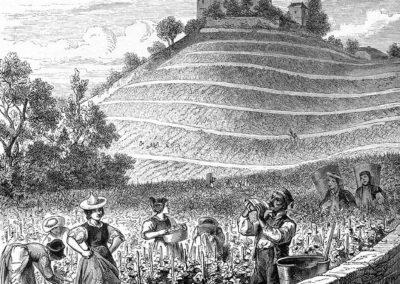 Vendange aux pied du château de Châtelard près Clarens par Gustave Roux, illustrateur, gravures sur bois par G. Perrichon et Buri & Jeker, 1869
