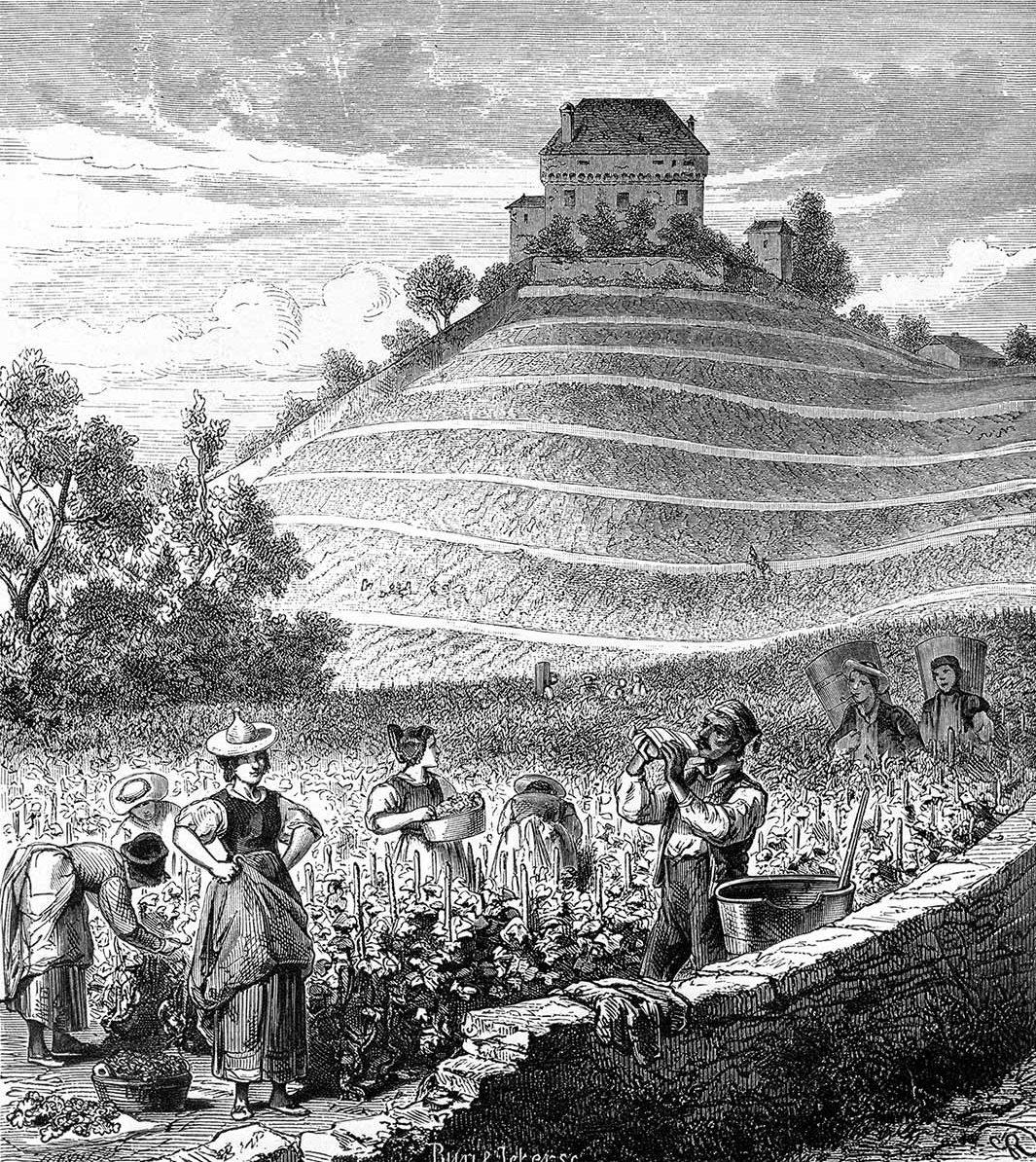 Vendanges aux pied du château de Châtelard près Clarens Par Gustave Roux, illustrateur, gravures sur bois par G. Perrichon et Buri & Jeker, 1869