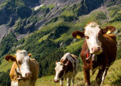 Depuis le petit vallon de l'Arpette, vue sur la Cime-de-l'Est et les arêtes du Dardeu et des Trois Merles